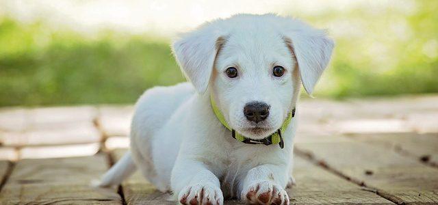 Das leckerste Hundefutter